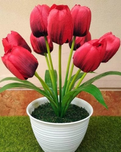 Tulip Mini Cantik